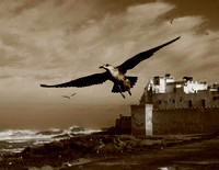 sepia photo of seagull in Morocco. Beata Cosgrove, photographer in Bath