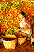 Tomato sorter, Burma. Beata Cosgrove, photographer in Bath